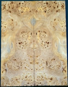 Burl Poplar Top    large BASS guitar size