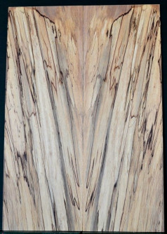 Spalted Beech MASTER