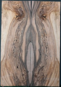 Spalted Walnut Bass Top