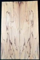 Spalted Beech 5A